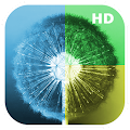 Free Wallpapers - Dandelion WallHub APK for Windows 8