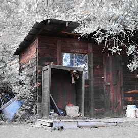 A shed in the Mountains by Robert Maxwell - Buildings & Architecture Other Interior ( water, shed, statues, trees, mountain home, flowers, old building, woods, north carolina )