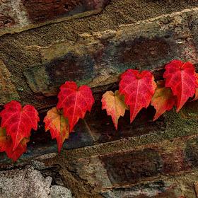 z IMG_2128_29_30_fused vines on bricks edit.jpg