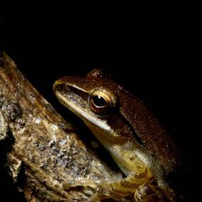 by Mbah Gatot Nugroho Susanto - Animals Amphibians