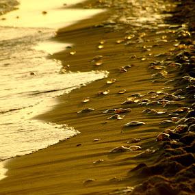 Jelly fish by Jakub Juszyński - Landscapes Beaches ( fish, sea, jelly, beach, morning, sun )