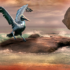 The Landing by William Underwood  - Digital Art Animals ( dubai seychelles alphounse island )