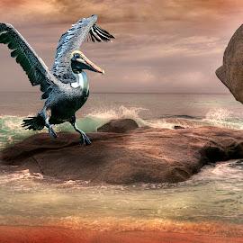 The Landing by William Underwood  - Digital Art Animals ( dubai seychelles alphounse island )