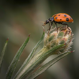 by Larry Rogers - Animals Insects & Spiders