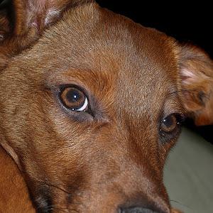 a brown eyes.jpg