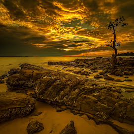 A Dream of Gold by NC Wong - Landscapes Sunsets & Sunrises ( clouds, tree, santubong, sunset, seascape, beach, rocks, golden )