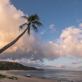 Sunset Point Hawaii Sunrise by Jim Downey - Landscapes Sunsets & Sunrises ( clouds, palm, dawn, morning light, sunset beach )