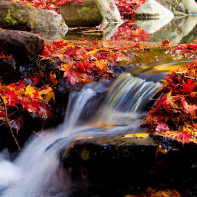 Autum is Magic by Keith Sutherland - Nature Up Close Water ( fall autum water stream red leaves,  )