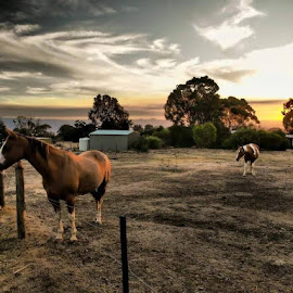 by Robert De Paulis - Animals Horses