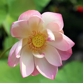 by J W - Flowers Single Flower