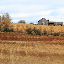 by Linda    L Tatler - Landscapes Prairies, Meadows & Fields