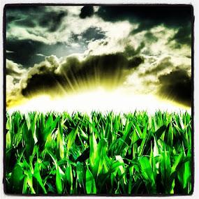 Corn by Brennan Adamus - Instagram & Mobile Other (  )