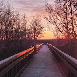 Sunset Boardwalk by Patricia Phillips - Landscapes Travel ( boardwalks marshes alaska potter )