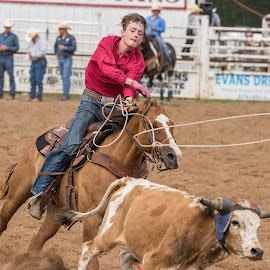 by Kevin Esterline - Sports & Fitness Rodeo/Bull Riding ( horse, cowboy, roping, steer, rodeo )