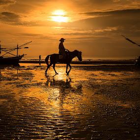 Walk by Arthit Somsakul - Landscapes Beaches ( sand, sillhouette, horse, sea, boat, walk )