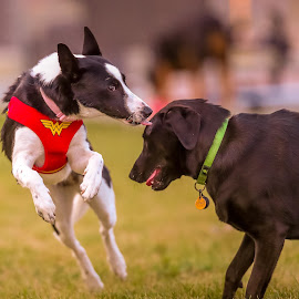 A Kiss by Peter Marzano - Animals - Dogs Playing