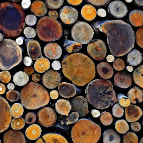 Logs by Francis Xavier Camilleri - Artistic Objects Other Objects (  )