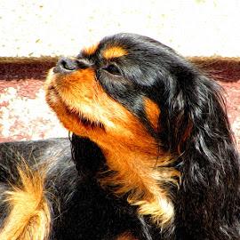 by Alenka Predic - Animals - Dogs Portraits