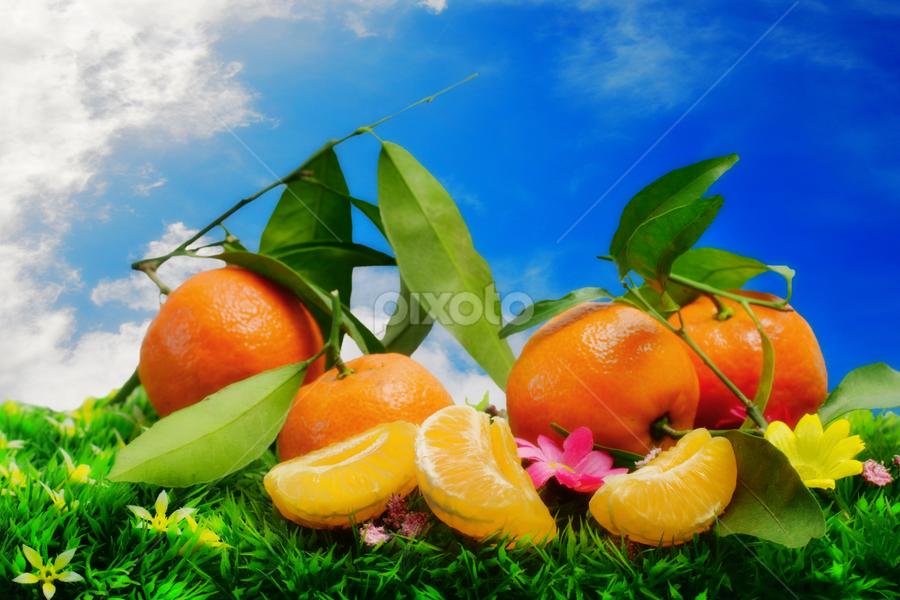 fresh clementines against blue sky by Donatella Tandelli - Food & Drink Fruits & Vegetables ( fruitsm fruit, clouds, juicy, outdoora, flowering, colorful, greem, autumnal food, feeding, leaf, field, sky, vitamins, clementine, bio, blue, sesaonal, food, branch, slice, peel )