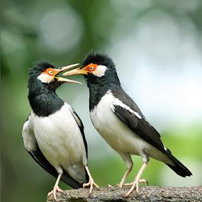 Goal by Yan Abimanyu - Animals Birds
