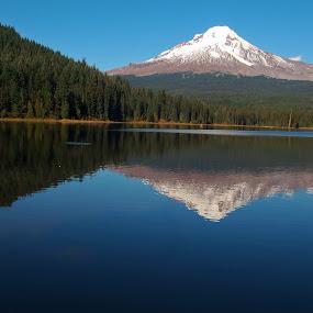 Trillium treasure by Karl Jones - Landscapes Mountains & Hills (  )