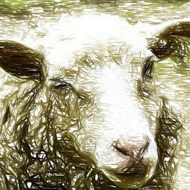 Snowy Ewe by Roxanne Dean - Digital Art Animals ( fleece, artisic, ewe, sheep, wool )