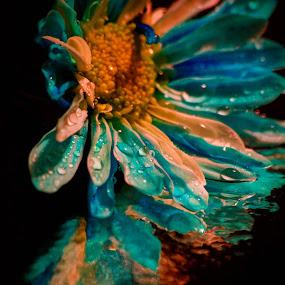 by Christine Weaver-Cimala - Flowers Single Flower ( canon, water, flash, reflection, blue, drop, art, daisy, wet )