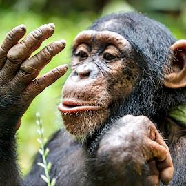 Look, a hand! by Carol Plummer - Animals Other Mammals