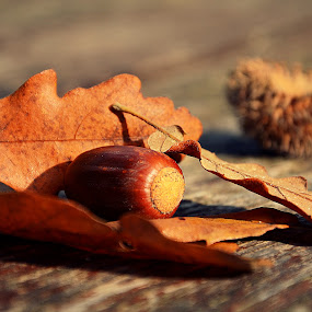 Autumn by Zsuzsi Zsidai - Nature Up Close Other Natural Objects