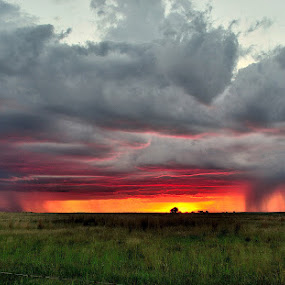 African Rain. by Dave Ross - Landscapes Weather ( clouds, sunset, pwcfoulweather, storm, africa, rain )