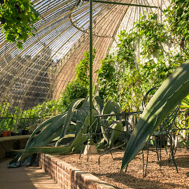Greenhouse by Darrell Evans - Buildings & Architecture Other Interior ( bricks, glass, green, conservatory, old, flowers & plants, flora, greenhouse, walkway, building, flower, shelf, stone, path, plant, cactus, indoors, growth, no people, wall )