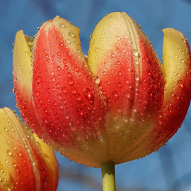 Fresh by Ad Spruijt - Flowers Flower Gardens