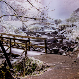 Winter Wonderland by Colin Erskine - Landscapes Forests ( oregon, portland, ice storm, winter, multnomah falls, ice river, guy w. talbot state park, latourell creek, bridge, frozen, columbia river gorge, latourell falls, hiking )