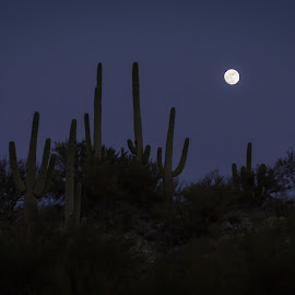 Honey Bee Canyon by Gannon McGhee - Landscapes Deserts ( moon, bee, arizona, tucson, canyon, cactus, saguaro, honey )