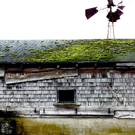 Wenzel by Jon Ablicki - Instagram & Mobile iPhone ( roof, barn, color, moss, windmill, abandoned )