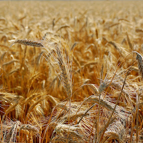 Birth of bred by Elena Lashneva - Landscapes Prairies, Meadows & Fields