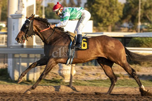Gold Duck (Passion for Gold) brilló en Handicap (1000m-Arena-CHS). - Staff ElTurf.com