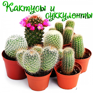 Download Кактусы и Суккуленты For PC Windows and Mac
