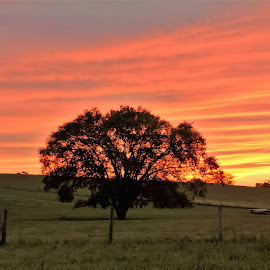 Peaceful Solution. by Jim Dawson - Novices Only Landscapes ( orange, fence, red, tree, grass, sunset )