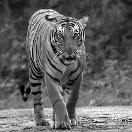 by S Balaji - Black & White Animals