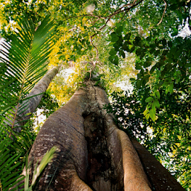 Rainforest Tree by Rob Kovacs - Nature Up Close Trees & Bushes