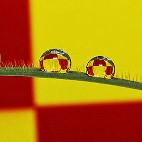 by Ryan Espe - Abstract Macro