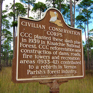 CCC planted these slash pine in 1939 in Kisatchie National Forest. CCC reforestation and construction of dams, roads, fire towers and recreation areas (1933-42) contributed to a rebirth in Vernon ...