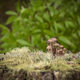 Mushroom Village by Tracey Pogson - Nature Up Close Mushrooms & Fungi ( fungi, green, forest, miniature, mushrooms )