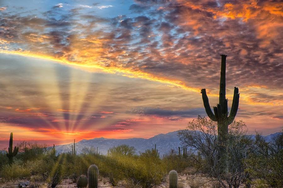 Desert Blanket by Charlie Alolkoy - Landscapes Deserts ( desert, sunset, arizona, tucson, sunrise, landscape )