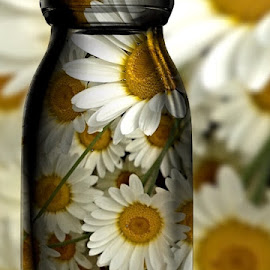 Daisies  by Paula Palmer - Digital Art Things ( flora, daisies, vibrant, bottle, flowers )
