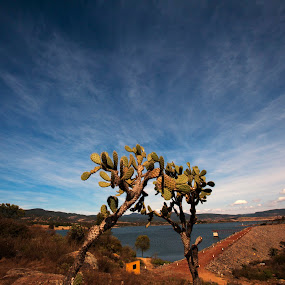 Cactus and clouds by Cristobal Garciaferro Rubio - Nature Up Close Other plants ( clouds, tapalpa, sky, lagoon, mexico, cactus )