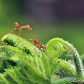 Do You Need Hand by Hirza Kini - Animals Insects & Spiders ( macro, nature, d90, green, ants, nikon, closeup )