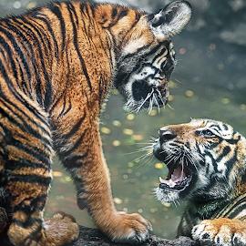 Saigon by Tran Ngoc Phuc Ngoctiendesign - Animals Lions, Tigers & Big Cats