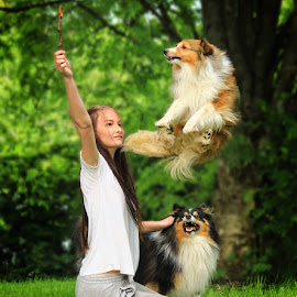Jump! by Jane Bjerkli - Animals - Dogs Playing ( expression, animals, dogs, shetland sheepdogs, shelties, fun, norway, jump, playing, girl, teenager, pets, summer )
